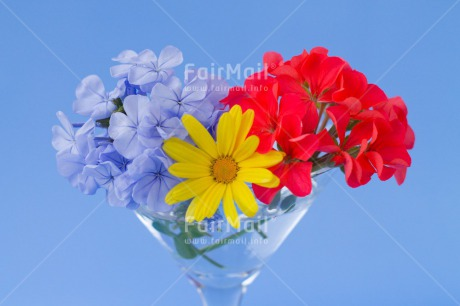 Fair Trade Photo Blue, Colour image, Colourful, Contrast, Fathers day, Flower, Flowers, Glass, Horizontal, Love, Marriage, Mothers day, Multi-coloured, Peru, Seasons, Sorry, South America, Spring, Summer, Thank you, Valentines day, Wedding