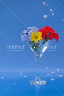 Fair Trade Photo Blue, Colour image, Colourful, Contrast, Fathers day, Flower, Flowers, Glass, Love, Marriage, Mothers day, Multi-coloured, Peru, Seasons, Sorry, South America, Spring, Summer, Thank you, Valentines day, Vertical, Wedding