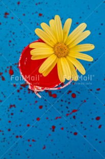 Fair Trade Photo Blue, Colour image, Colourful, Daisy, Flower, Moving, New home, Paint, Peru, Red, South America, Vertical, Welcome home, Yellow