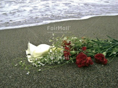 Fair Trade Photo Beach, Colour image, Condolence, Condolence/Sympathy, Flower, Horizontal, Peru, Sea, South America, Thinking of you, Water