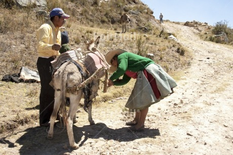 Fair Trade Photo Activity, Agriculture, Animals, Carrying, Clothing, Colour image, Cooperation, Day, Donkey, Horizontal, Latin, Mountain, One man, One woman, Outdoor, People, Peru, Rural, South America, Traditional clothing, Transport, Travel