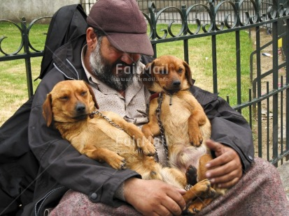Fair Trade Photo Activity, Animals, Care, Colour image, Dailylife, Dog, Funny, Horizontal, Love, One man, Outdoor, People, Peru, Portrait halfbody, Relaxing, Sitting, Sleeping, South America, Streetlife