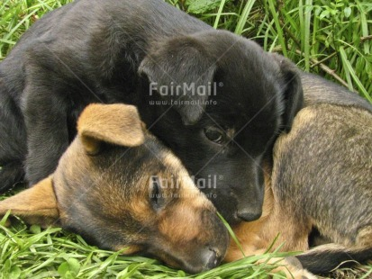 Fair Trade Photo Activity, Animals, Care, Colour image, Condolence/Sympathy, Cute, Day, Dog, Friendship, Grass, Horizontal, Love, Outdoor, Peru, Relaxing, Sleeping, South America, Thinking of you, Together