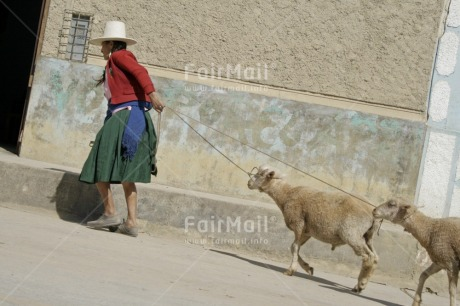 Fair Trade Photo Activity, Agriculture, Animals, Clothing, Colour image, Cooperation, Dailylife, Entrepreneurship, Horizontal, Market, One woman, Outdoor, People, Peru, Portrait fullbody, Red, Rural, Sheep, Sombrero, South America, Streetlife, Traditional clothing, Walking