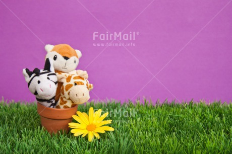 Fair Trade Photo Animals, Birthday, Brother, Colour image, Congratulations, Fathers day, Flower, Friend, Friendship, Get well soon, Green, Jar, Mothers day, New beginning, Party, Peluche, Peru, Pot, Purple, Sister, Sorry, South America, Thank you, Welcome home, Well done, Yellow
