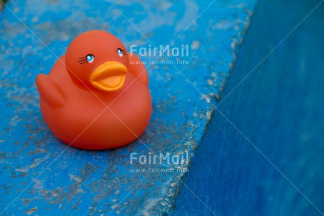 Fair Trade Photo Animals, Blue, Closeup, Colour image, Duck, Food and alimentation, Fruits, Horizontal, Orange, Peru, Shooting style, South America