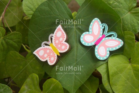 Fair Trade Photo Butterfly, Colour image, Green, Heart, Horizontal, Love, Nature, Peru, Plant, Seasons, South America, Summer, Valentines day