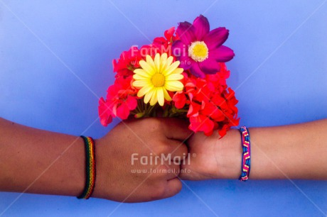 Fair Trade Photo Colour image, Flowers, Friendship, Gift, Hand, Hands, Horizontal, Indoor, Peru, Sorry, South America, Thank you
