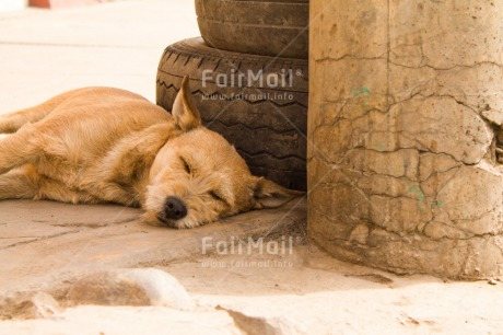 Fair Trade Photo Activity, Animals, Colour image, Day, Dog, Horizontal, Outdoor, Peru, Relax, Sleeping, South America, Street