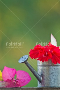 Fair Trade Photo Birthday, Colour image, Colourful, Flower, Friendship, Green, New home, Peru, South America, Tarapoto travel, Thank you, Thinking of you, Vertical, Watering can