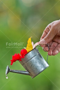 Fair Trade Photo Birthday, Colour image, Colourful, Flower, Friendship, Green, Hand, New home, Peru, South America, Tarapoto travel, Thank you, Thinking of you, Vertical, Water, Waterdrop, Watering can