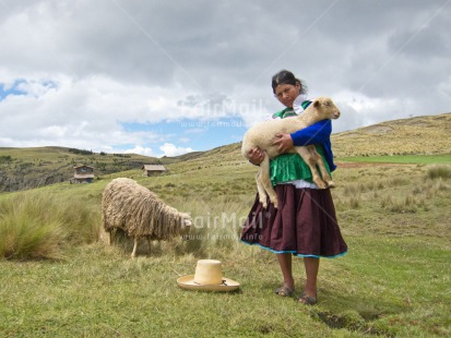 Fair Trade Photo Activity, Agriculture, Animals, Care, Clothing, Clouds, Day, Ethnic-folklore, Farmer, Grass, Horizontal, Latin, Looking at camera, One woman, Outdoor, People, Peru, Portrait fullbody, Rural, Sheep, Sky, Sombrero, South America, Traditional clothing