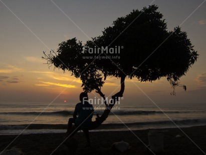 Fair Trade Photo Backlit, Beach, Colour image, Emotions, Evening, Horizontal, Loneliness, One boy, Outdoor, People, Peru, Scenic, Silhouette, Sky, South America, Sunset, Thinking of you, Travel, Tree
