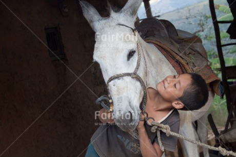 Fair Trade Photo 5_-10_years, Activity, Animals, Care, Colour image, Cute, Horse, Hugging, Latin, Love, One boy, People, Peru, Portrait halfbody, Rural, Smiling, South America