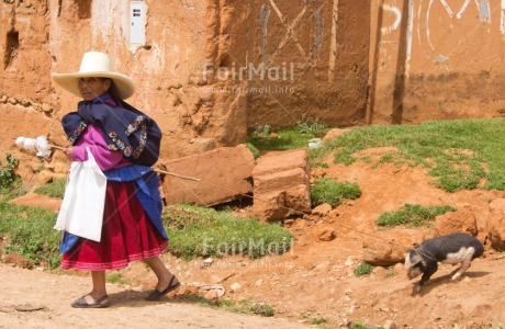 Fair Trade Photo Activity, Agriculture, Animals, Colour image, Day, Ethnic-folklore, Funny, Hat, Horizontal, Latin, One woman, Outdoor, People, Peru, Pig, Rural, Sombrero, South America, Walking, Wool