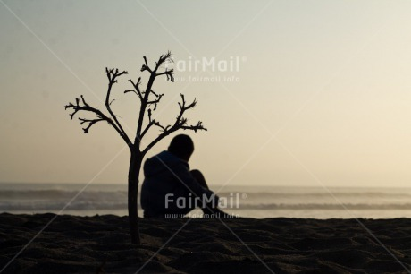Fair Trade Photo Activity, Colour image, Horizontal, One boy, People, Peru, Relaxing, Sea, Shooting style, Silhouette, South America, Tree