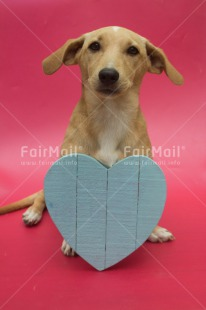 Fair Trade Photo Animals, Colour image, Cute, Dog, Friendship, Heart, Love, Mothers day, Peru, South America, Valentines day, Vertical