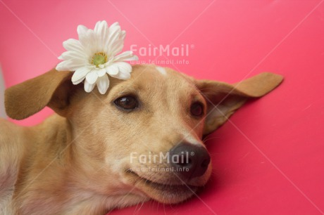 Fair Trade Photo Animals, Colour image, Cute, Dog, Flower, Horizontal, Love, Mothers day, Peru, Sorry, South America, Valentines day