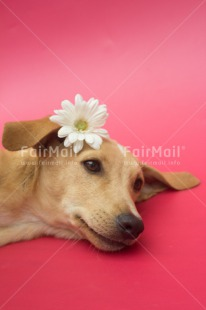 Fair Trade Photo Animals, Colour image, Cute, Dog, Flower, Love, Mothers day, Peru, Sorry, South America, Valentines day, Vertical
