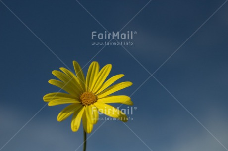 Fair Trade Photo Blue, Clouds, Colour image, Condolence/Sympathy, Flower, Horizontal, Mothers day, Peru, Sky, South America, Summer, Yellow