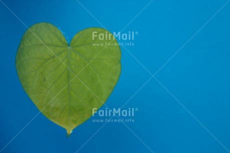 Fair Trade Photo Blue, Colour image, Condolence/Sympathy, Green, Heart, Horizontal, Leaf, Love, Peru, South America, Valentines day