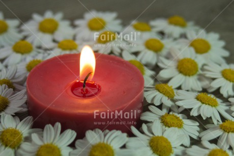Fair Trade Photo Candle, Christmas, Colour image, Condolence/Sympathy, Daisy, Flame, Flower, Horizontal, Love, Peru, Red, South America, Thinking of you