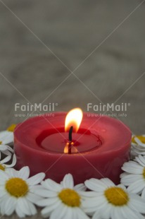 Fair Trade Photo Candle, Christmas, Colour image, Condolence/Sympathy, Daisy, Flame, Flower, Love, Peru, Red, South America, Thinking of you, Vertical
