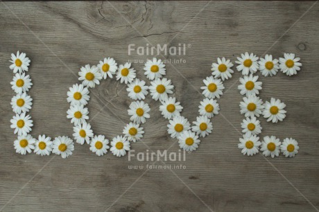 Fair Trade Photo Colour image, Daisy, Flower, Horizontal, Love, Marriage, Peru, South America, Valentines day, Wedding