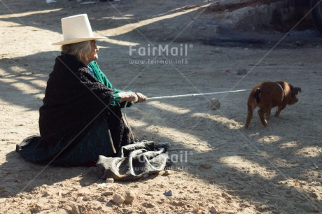 Fair Trade Photo Agriculture, Animals, Colour image, Hat, Horizontal, Market, One woman, People, Peru, Pig, Rural, Sombrero, South America