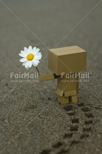 Fair Trade Photo Colour image, Daisy, Danboard, Flower, Peru, Sorry, South America, Thinking of you, Valentines day, Vertical