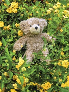 Fair Trade Photo Animals, Bear, Birthday, Colour image, Cute, Day, Flower, Friendship, Funny, Garden, Green, Nature, Outdoor, Peru, Seasons, South America, Summer, Teddybear, Vertical, Yellow