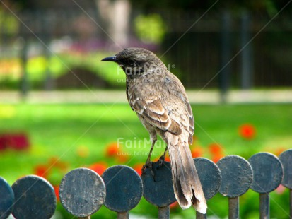 Fair Trade Photo Activity, Animals, Bird, Colour image, Garden, Green, Horizontal, Nature, Park, Peru, Seasons, Sitting, South America, Summer