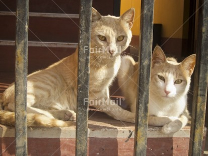 Fair Trade Photo Activity, Animals, Cat, Colour image, Day, Horizontal, House, Indoor, Looking at camera, Peru, South America, Together, Two cats