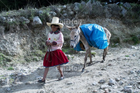 Fair Trade Photo Activity, Agriculture, Animals, Care, Child labour, Clothing, Day, Donkey, Ethnic-folklore, Horizontal, Mountain, One girl, Outdoor, People, Portrait fullbody, Rural, Sombrero, Traditional clothing, Walking