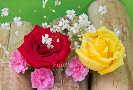 Fair Trade Photo Closeup, Colour image, Flower, Love, Mothers day, Peru, Rose, South America, Studio, Thank you, Valentines day, Wood