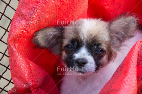 Fair Trade Photo Activity, Animals, Colour image, Cute, Dog, Looking at camera, Peru, Puppy, South America