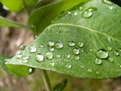 Fair Trade Photo Colour image, Focus on foreground, Green, Horizontal, Leaf, Nature, Outdoor, Peru, Plant, South America, Spirituality, Sustainability, Values, Waterdrop