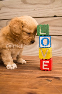 Fair Trade Photo Animals, Colour image, Colourful, Cute, Dog, Letters, Love, Peru, Puppy, South America, Text, Valentines day, Vertical, Wood