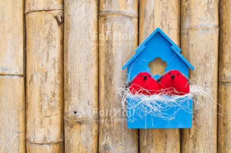 Fair Trade Photo Animals, Bird, Birdhouse, Blue, Colour image, Couple, Horizontal, Love, Nest, New home, Peru, Red, South America, Together, Valentines day