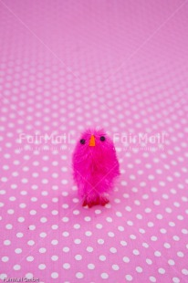Fair Trade Photo Birth, Chick, Colour image, Girl, New baby, People, Peru, Pink, South America, Vertical