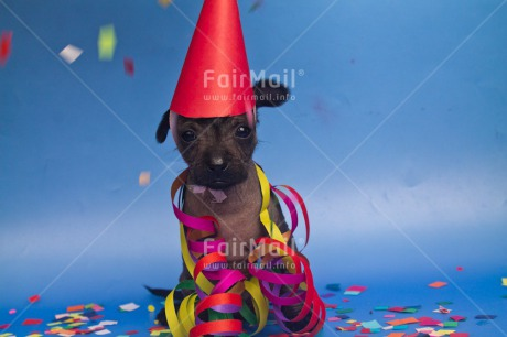 Fair Trade Photo Animals, Birthday, Colour image, Dog, Funny, Hat, Horizontal, Peru, Puppy, South America