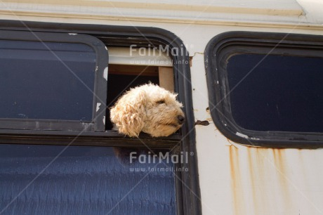 Fair Trade Photo Animals, Bus, Colour image, Dog, Funny, Good trip, Horizontal, Peru, South America, Transport, Travel