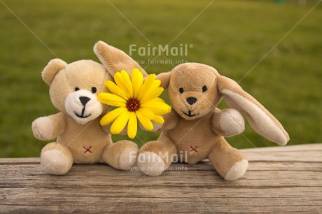 Fair Trade Photo Activity, Animals, Bear, Colour image, Couple, Flower, Friendship, Grass, Green, Horizontal, Love, Outdoor, Peru, Rabbit, Sitting, South America, Together, Toy, Two, Wood, Yellow