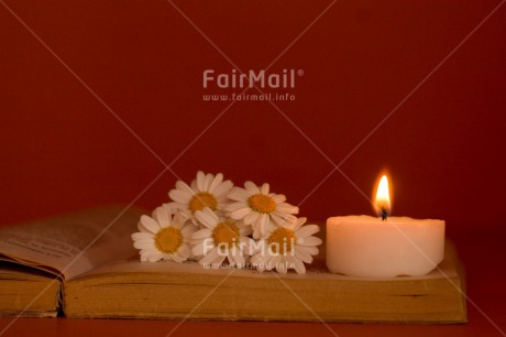 Fair Trade Photo Book, Candle, Colour image, Condolence/Sympathy, Daisy, Flower, Horizontal, Indoor, Light, Love, Peru, South America, White
