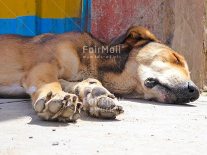 Fair Trade Photo Activity, Animals, Colour image, Day, Dog, Horizontal, Outdoor, Peru, Sleeping, South America, Street