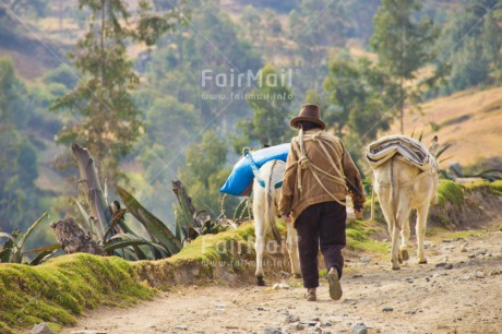 Fair Trade Photo Activity, Animals, Clothing, Colour image, Culture, Day, Donkey, Farmer, Horizontal, Latin, Man, Mountain, Nature, Outdoor, Path, People, Peru, Rural, South America, Traditional clothing, Walking