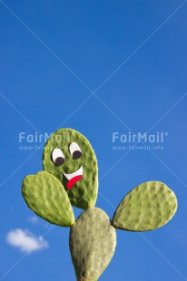 Fair Trade Photo Blue, Cactus, Colour image, Day, Funny, Green, Greeting, Nature, Outdoor, Peru, Sky, South America, Vertical