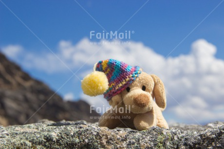 Fair Trade Photo Animals, Clothing, Cold, Colour image, Colourful, Day, Dog, Hat, Horizontal, Mountain, Multi-coloured, Nature, Outdoor, Peru, Seasons, South America, Toy, Winter
