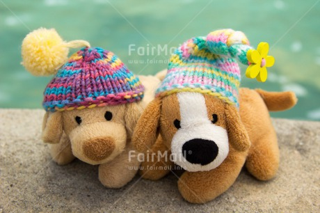 Fair Trade Photo Animals, Brother, Clothing, Cold, Colour image, Colourful, Day, Dog, Friendship, Hat, Horizontal, Lake, Multi-coloured, Nature, Outdoor, Peru, Seasons, Sister, South America, Toy, Winter