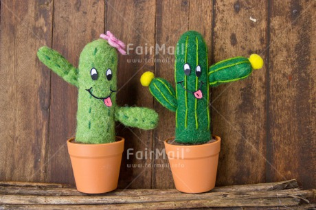 Fair Trade Photo Cactus, Colour image, Couple, Door, Friendship, Funny, Love, Peru, South America, Valentines day, Wood